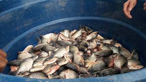 População recebe peixe para o consumo