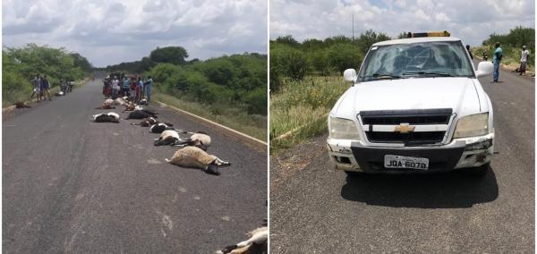 Veículo atropela e mata rebanho de ovelhas em Paulistana
